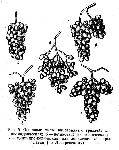 Основные типы виноградных гостей